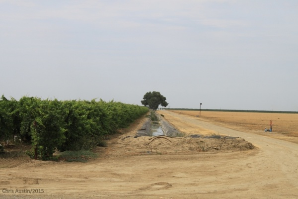 Drought's Economic Impact on Agriculture